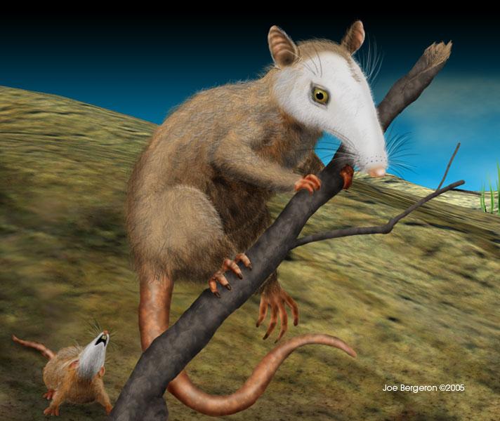 tertiary rodents panorama